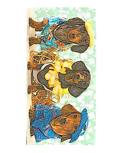 The Savvy Dachshunds Beach Towel